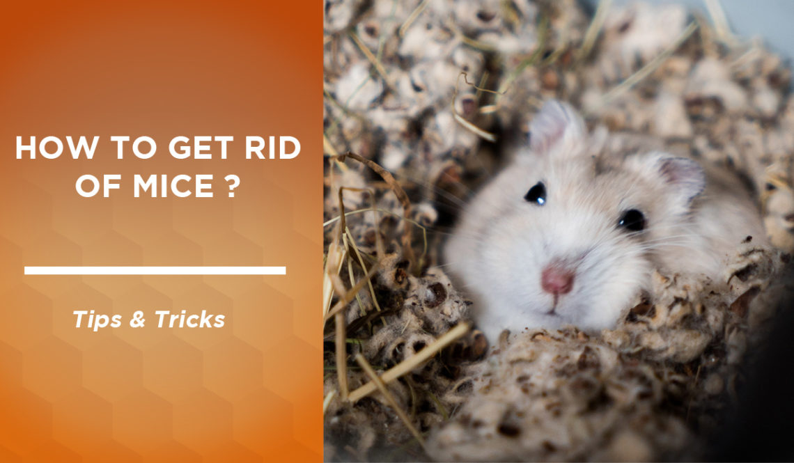 How to get rid of mice: our tips